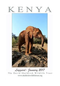 Luggard the Elephant